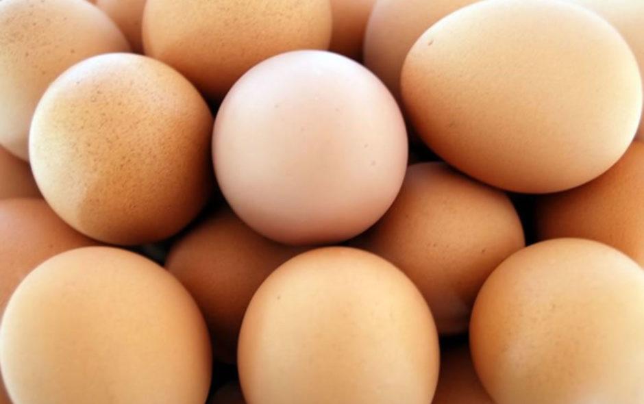 alimentos no cárnicos ricos en proteínas